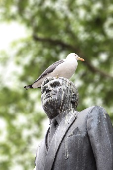 A recent avian protest